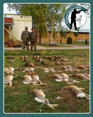hares hunting